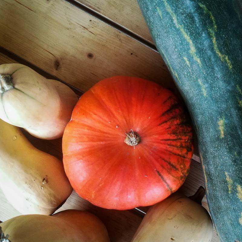 Vielfalt an Kürbissen: in der Küche hat der Kürbis im Herbst einen fixen Platz