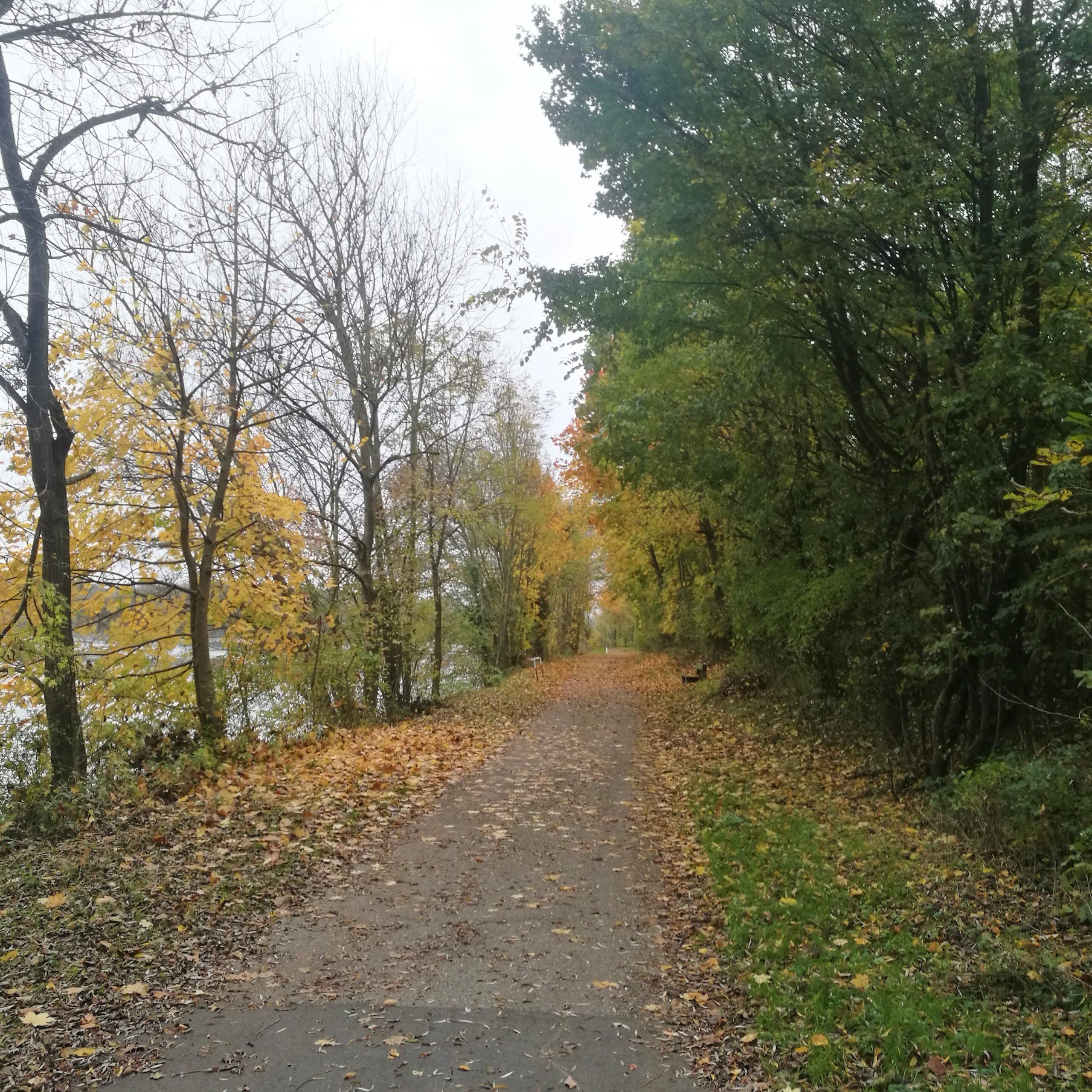 Weg mit Bäumen und Herbstlaub